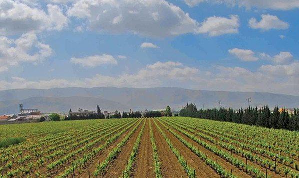 Wineries-lebanon-traveler