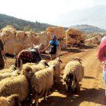 hiking-lebanon-traveler