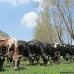 Agritourism Lebanon