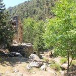 JAJ CEDAR FOREST