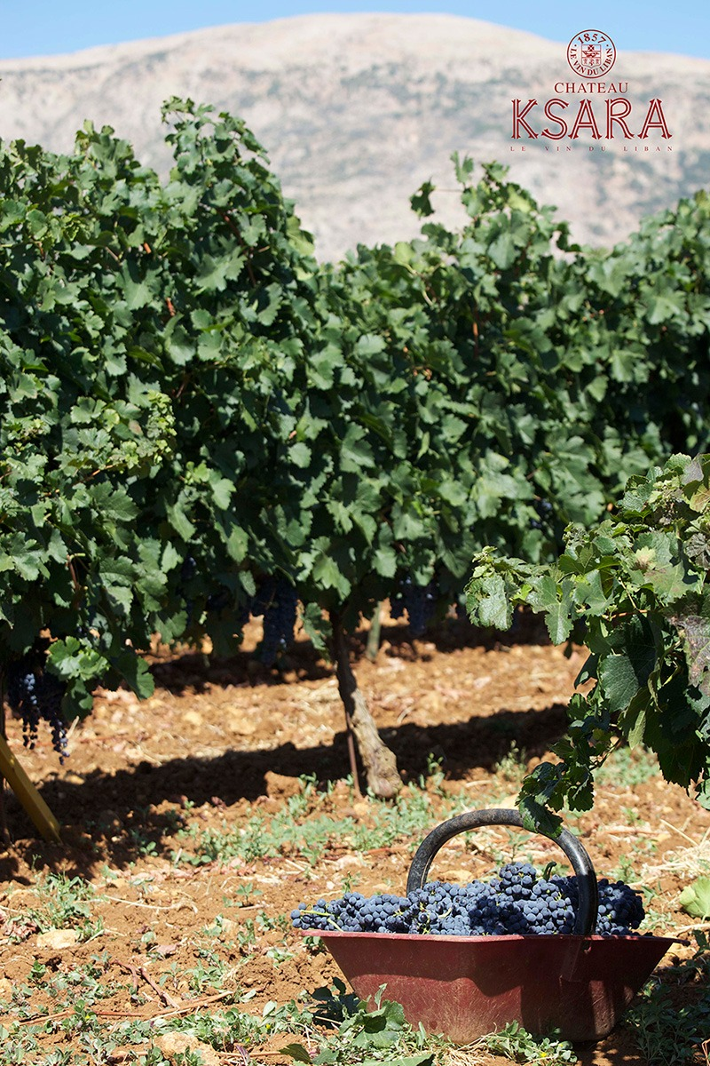 The Bekaa Valley Harvest Trail
