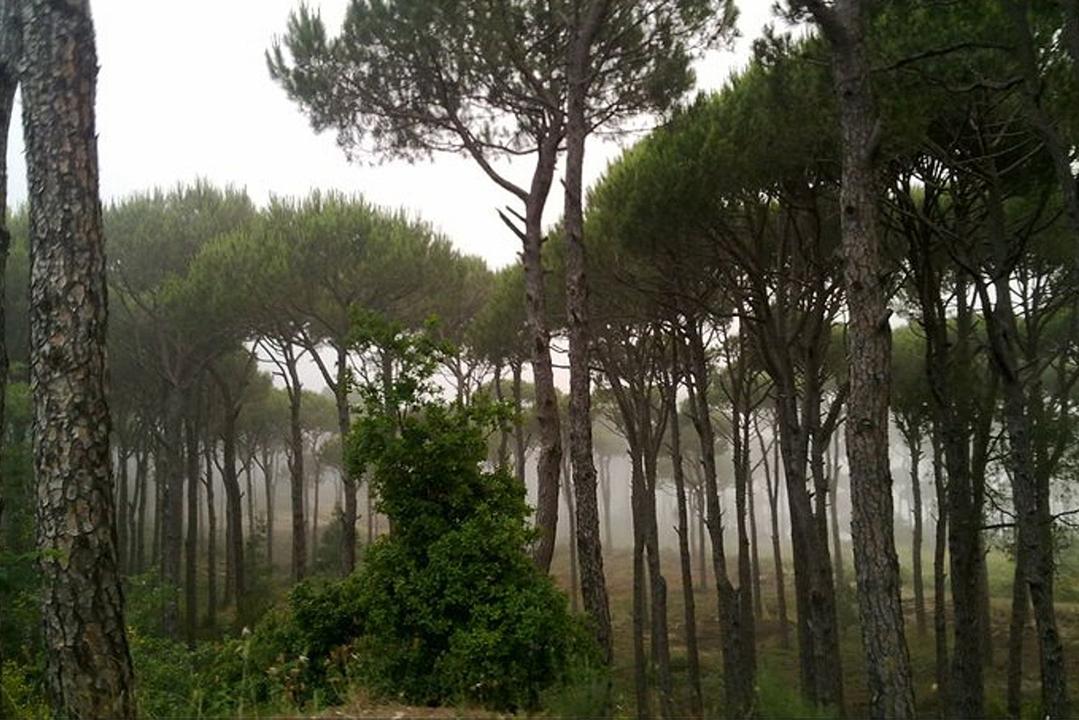 pine-forest-mtein-mini-guide-lebanon-traveler