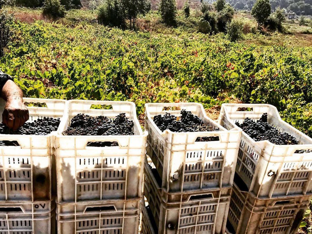 winery-mtein-mini-guide-lebanon-traveler