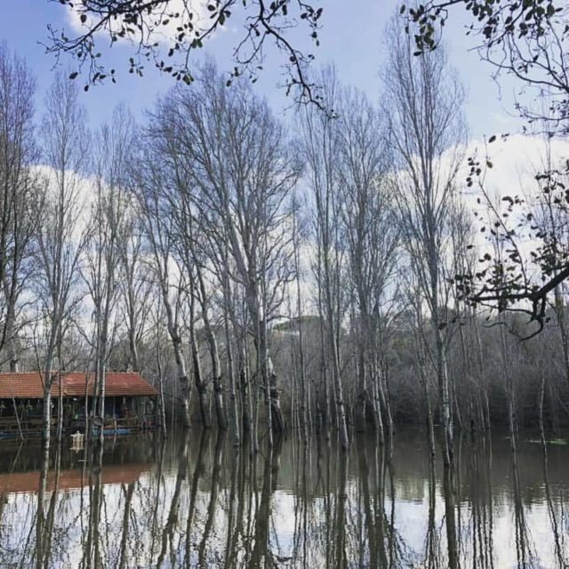 Cabin in the woods  whatgrettasees goodmorning monday lebanon lebanontravelerhellip