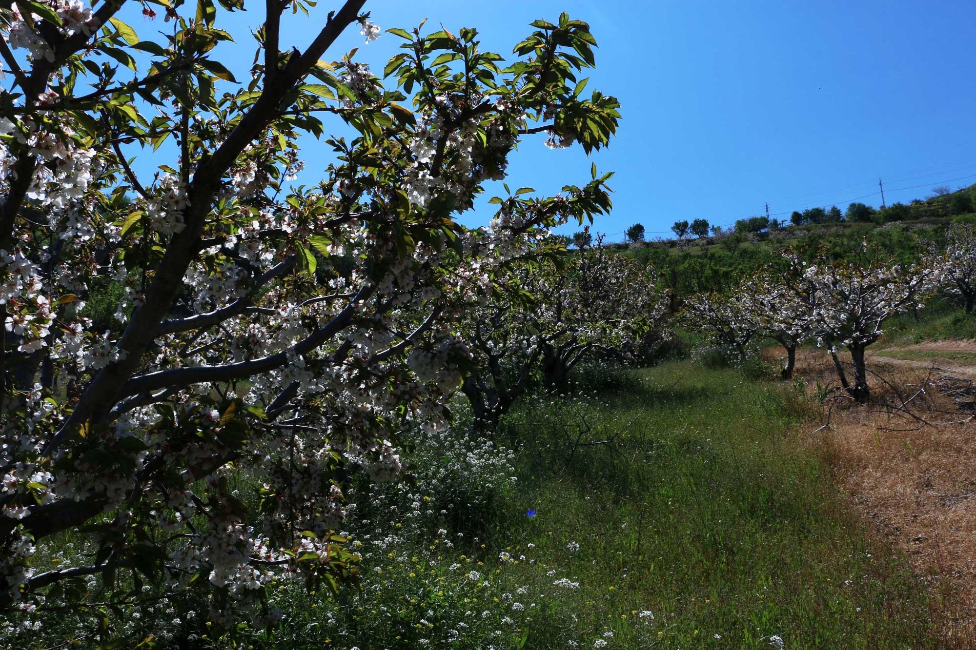 Nabi Alya's agricultural heritage