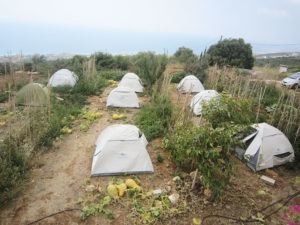 5-campsites-youll-love-tafla-smar-jbeil-lebanon-traveler