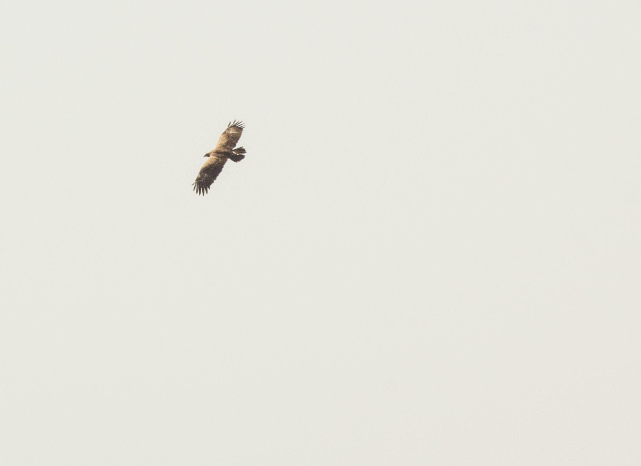 falcon-baskinta-lebanon-traveler