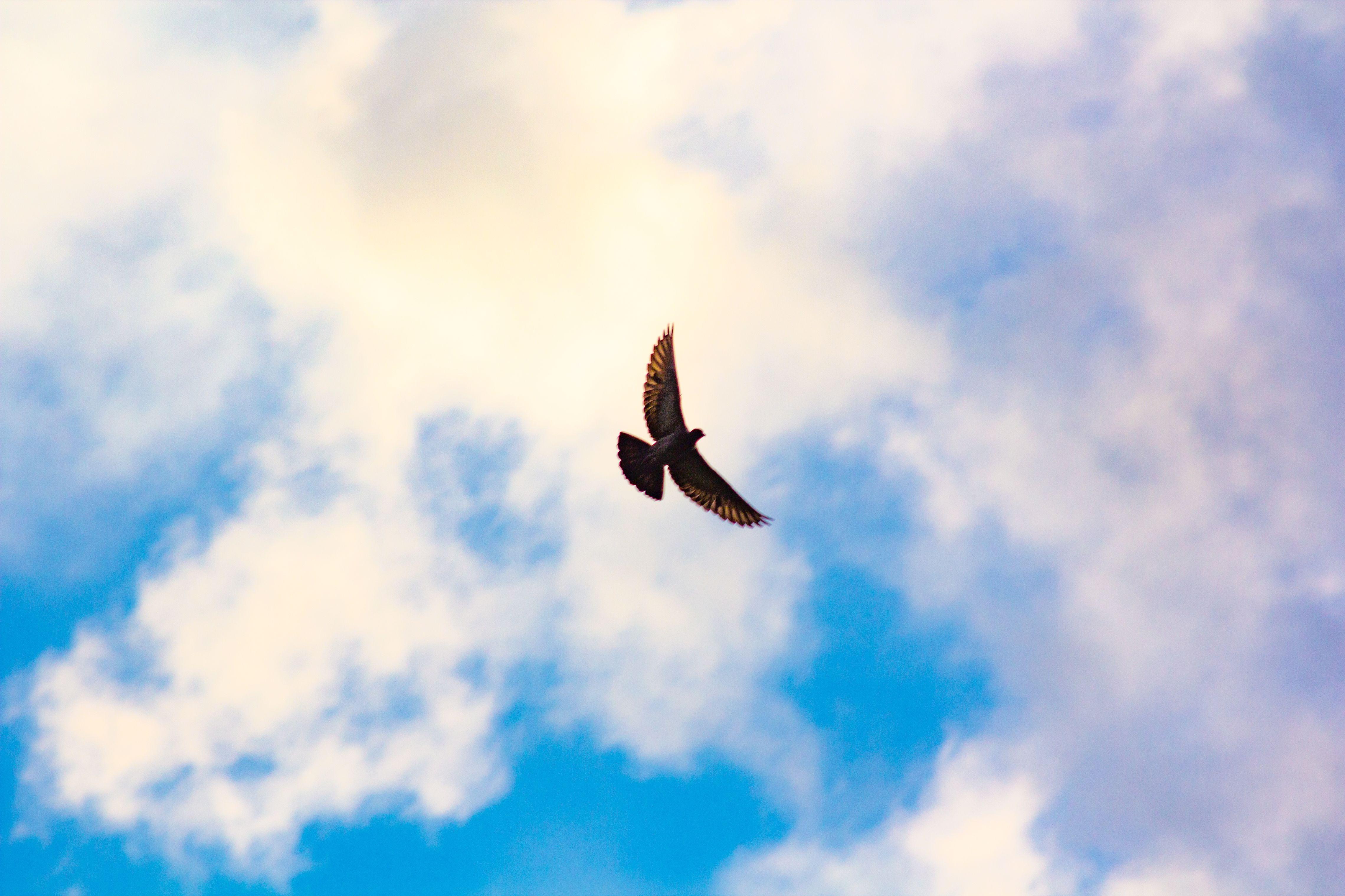 pigeon-sahel-alma-lebanon-traveler