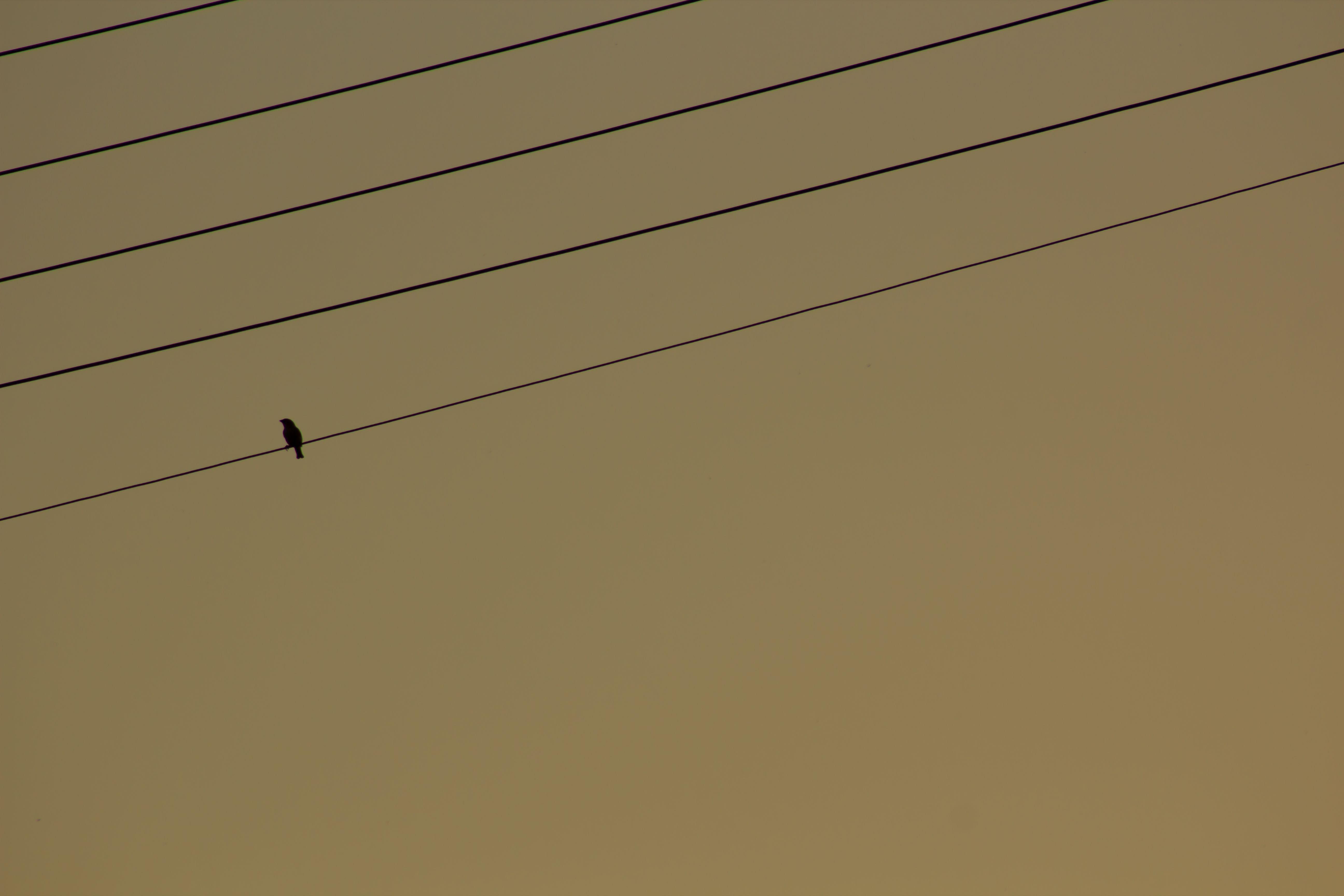cowbird-west-bekaa-lebanon-traveler