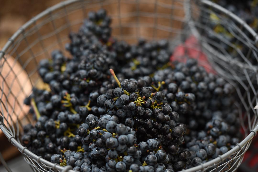 karam-wines-guide-lebanon-traveler