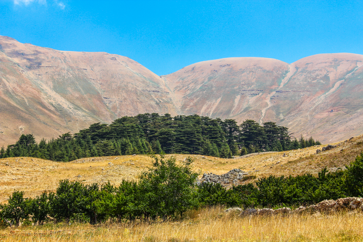 cedars-north-lebanon-lebanon-traveler