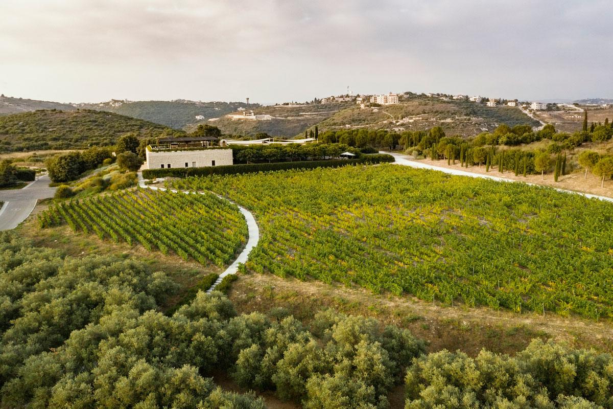ixsir-winery-lebanon-traveler-grapes-vineyards-wine-3
