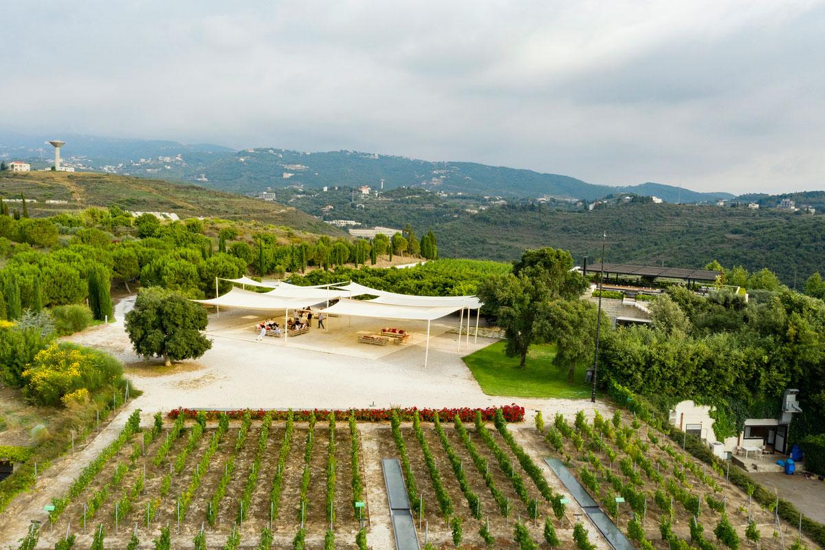 ixsir-winery-lebanon-traveler-grapes-vineyards-wine-4