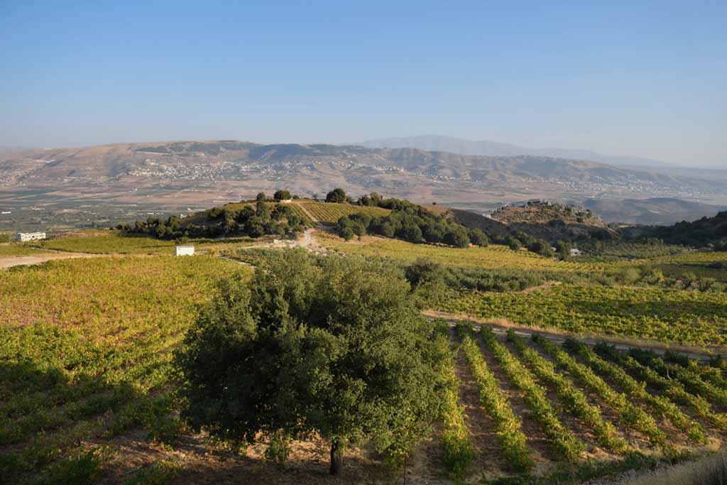 Chateau-Qanafar-winery-tour-lebanon-traveler
