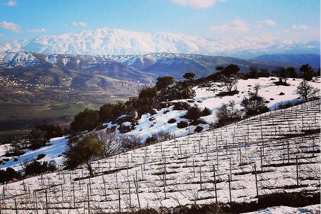 Chateau-Qanafar-vineyards-lebanon-traveler