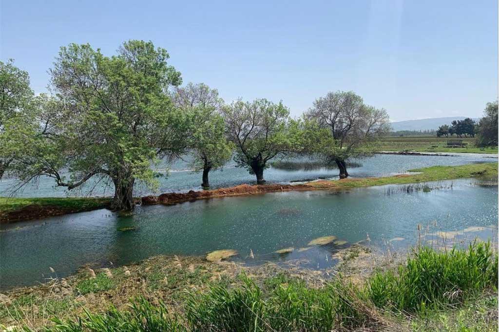 ammiq-bekaa-al-wadi-oak-pine-lebanon-traveler