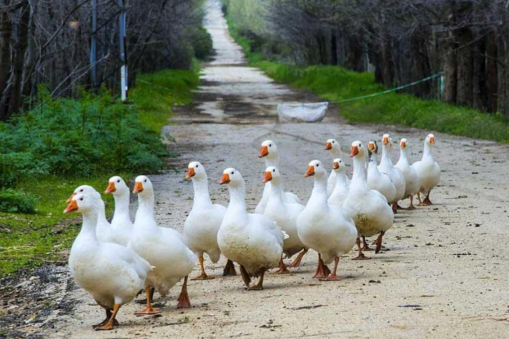 ammiq-bekaa-birds-animals-lebanon-traveler