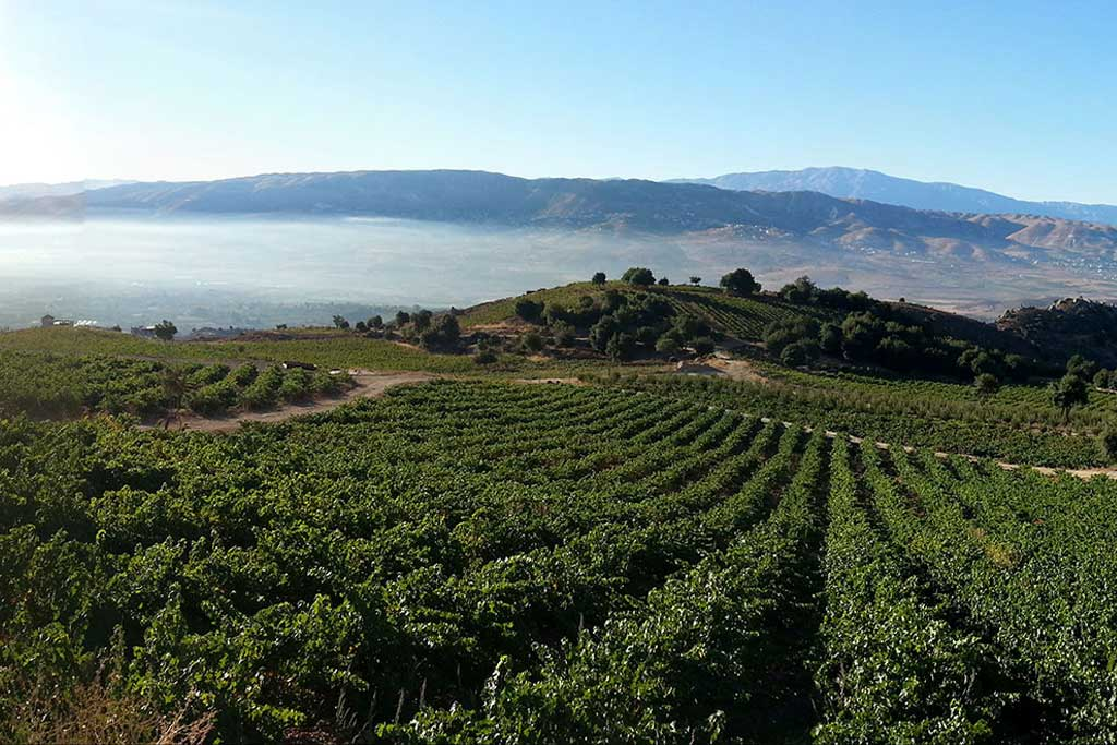 chateau-qanafar-winery-west-bekaa-lebanon-traveler