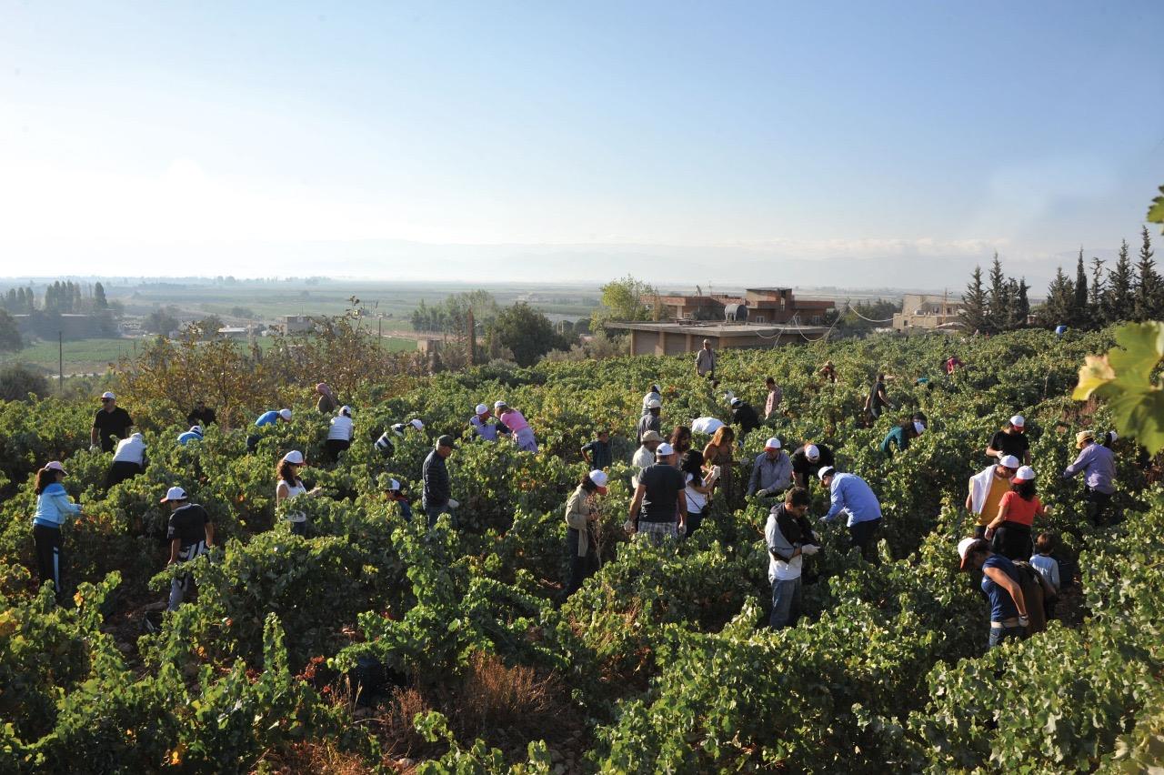 chateau-st-thomas-harvest-lebanon-traveler