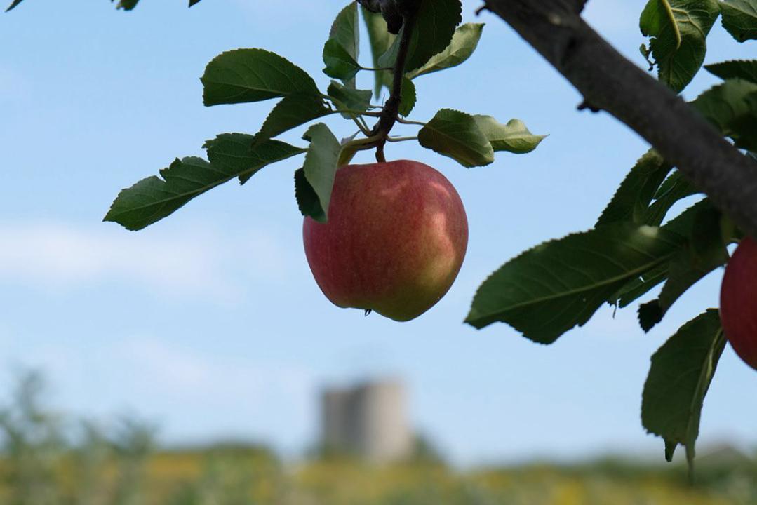 cidra-apple-farmer-lebanon-traveler