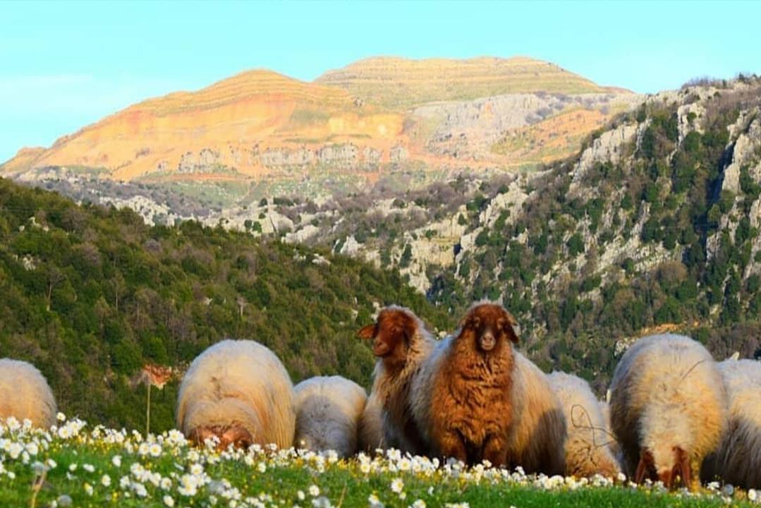 exploring-hiking-chahtoul-lebanon-traveler
