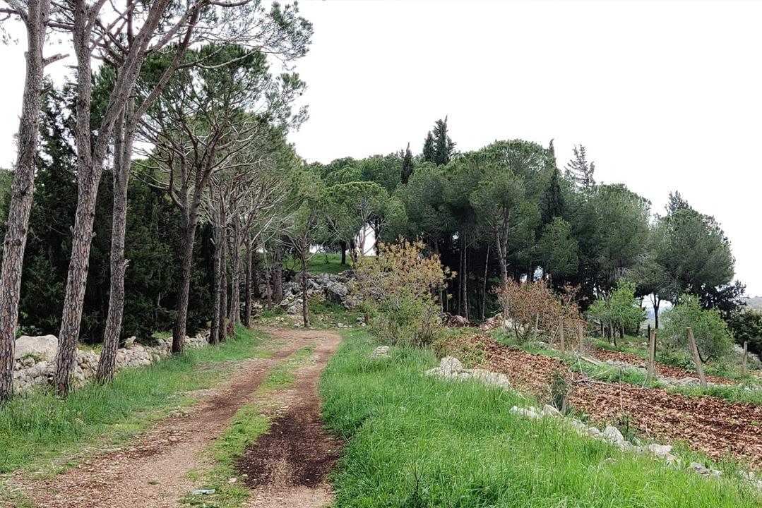 granite-green-wonders-nature-lebanon-traveler