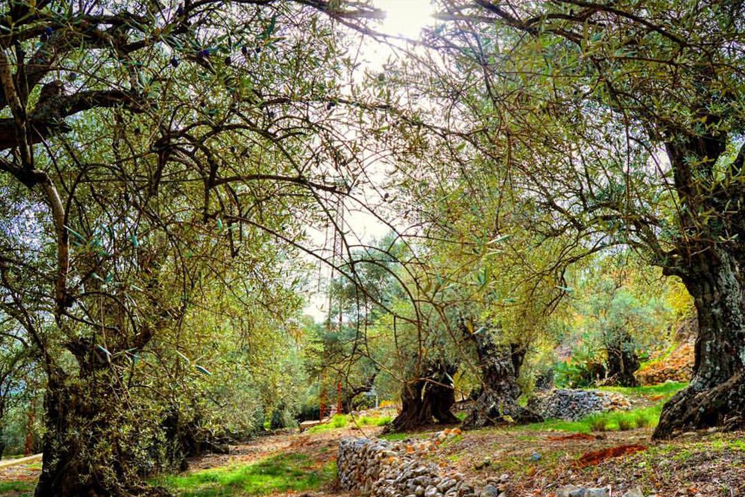kawkaba-agrliculture-nature-lebanon-traveler