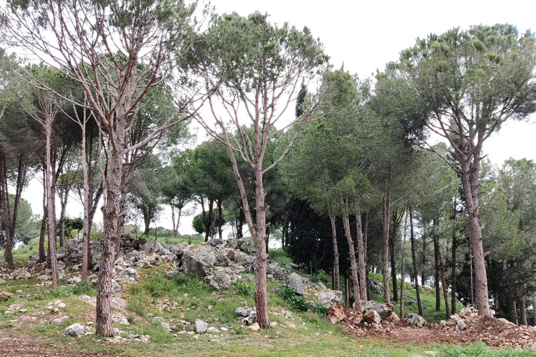 nmayriyeh-nature-reserve-lebanon-traveler