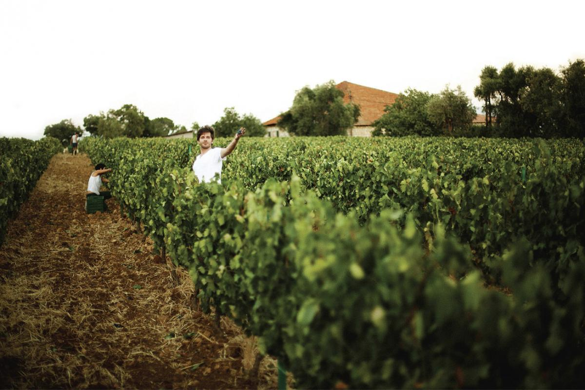 domaine des tourelles winery lebanon traveler chtaura