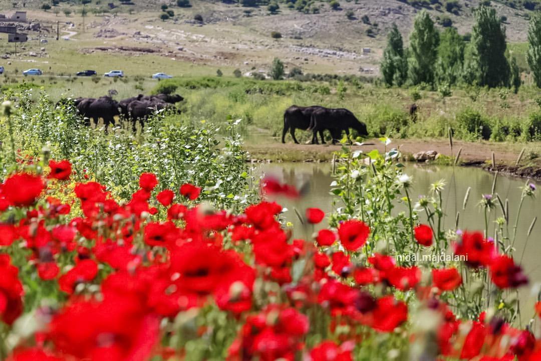 ammiq-nature-lebanon-traveler