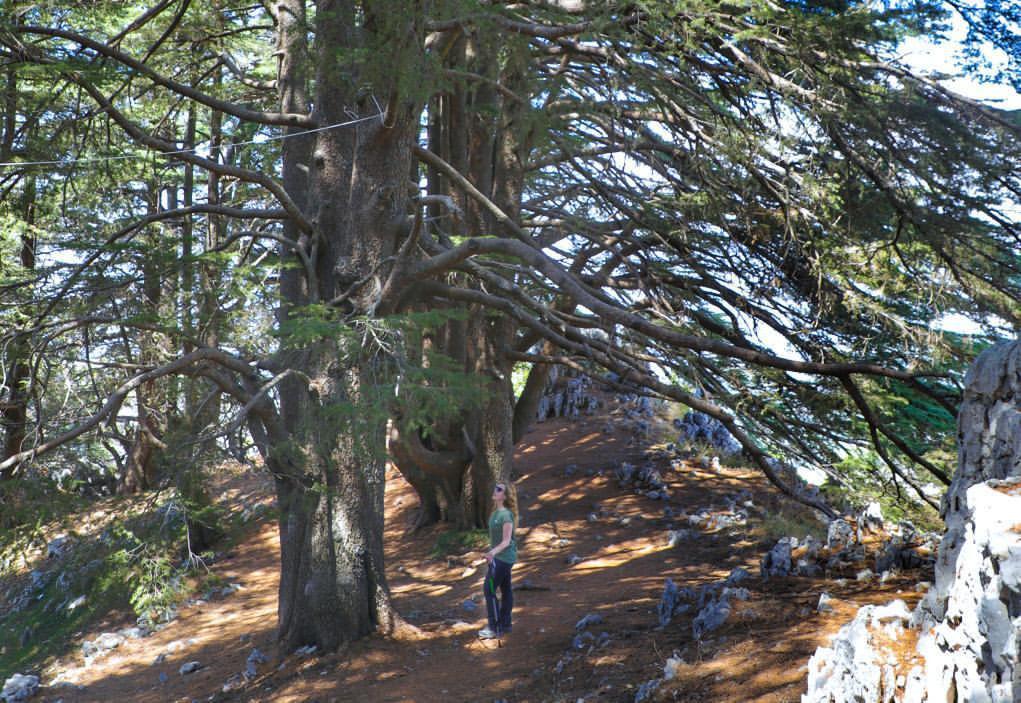 jaj-nature-lebanon-traveler