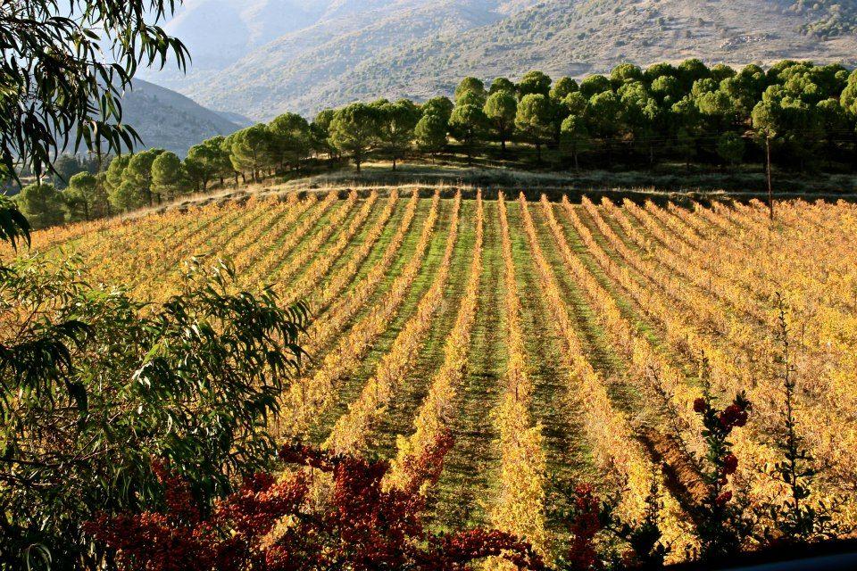 wineries-in-Lebanon-Lebanon-Traveler